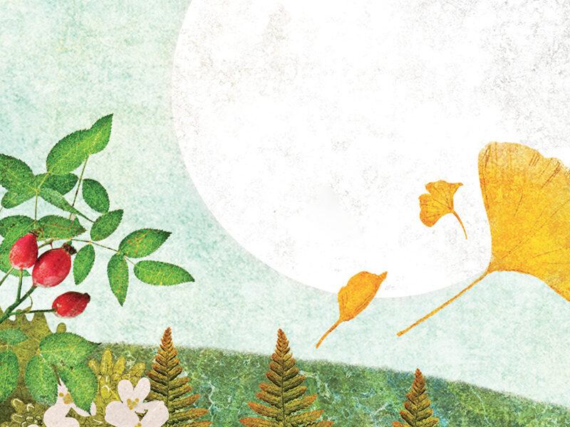 valentinabolognini-illustrazione-BARBANERA-18-immagine-evidenza
